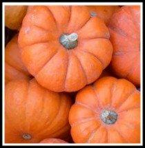 Sugar Pumpkin for Pumpkin Soup